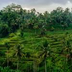 indonezia00021